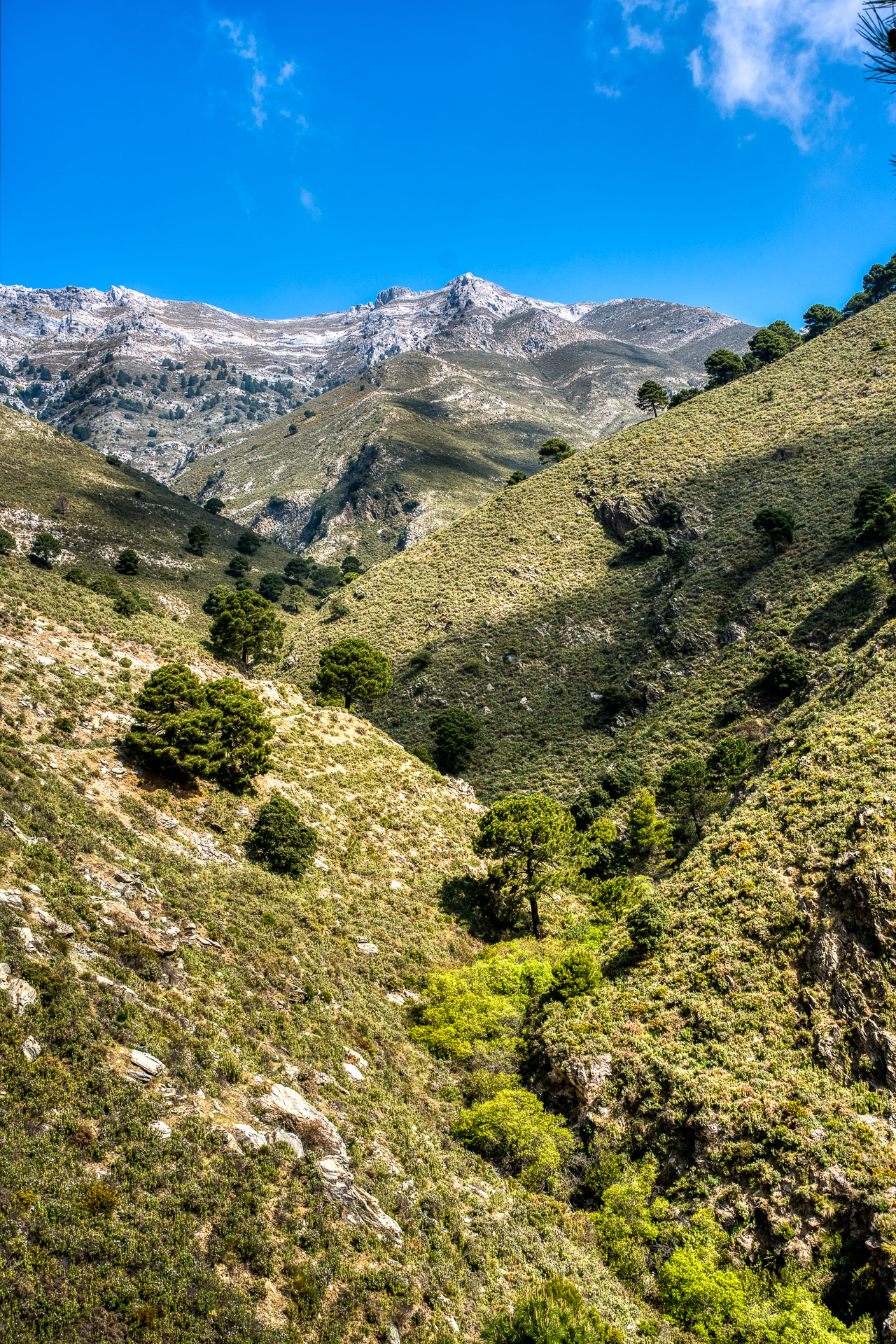 Springtime in the scenic Mountains of Andalucia, Spain.  Tags: Springtime, Andalucia, Spain, Malaga, mountains, landscape, scenic.