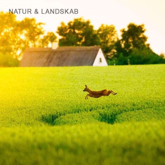 Naturfoto og landskabfotografi